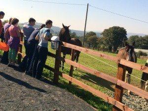 CSPE Trip to Kilfinane Animal Welfare Centre