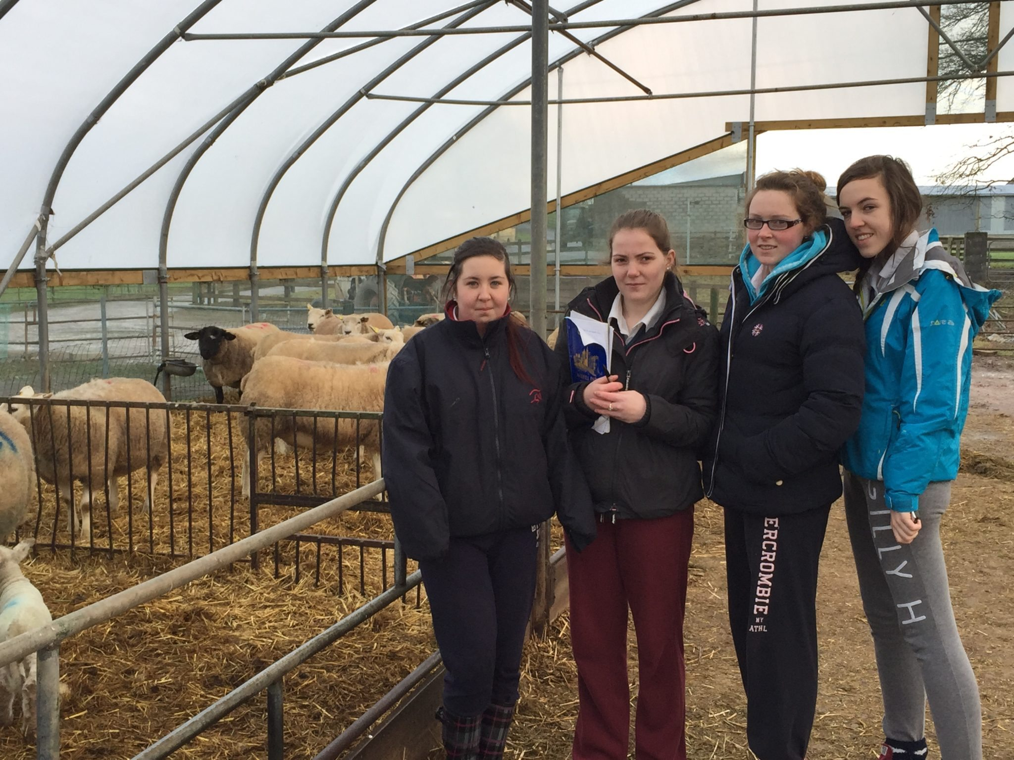 6th Year Desmond College students Claire Scanlon, Siobhan Moloney, Claire Collum and Shauna Hough study the Sheep Farm at Pallaskenry Agricultural College.