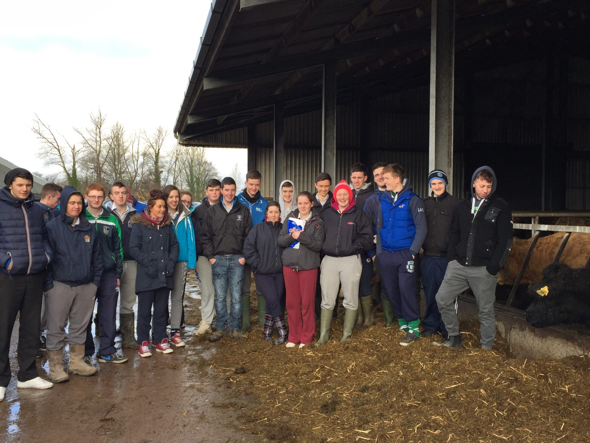 6th Year Pupils of Desmond College on a farm walk at Pallaskenry Agricultural College