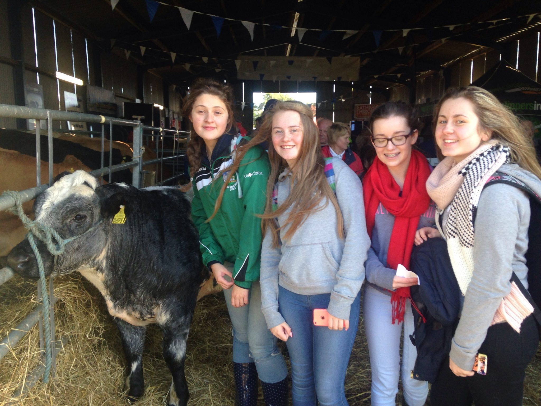 Ploughing 2015: Desmond College TY Students checking livestock