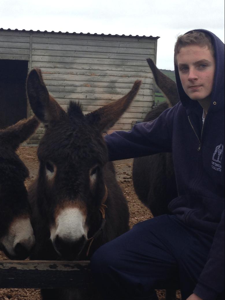 26 Nov 2015: Desmond College Adopt A Donkey